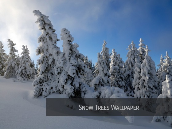 Snow-Trees-Wallpaper