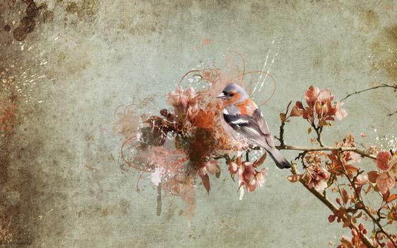 La Solitudine spring-wallpaper