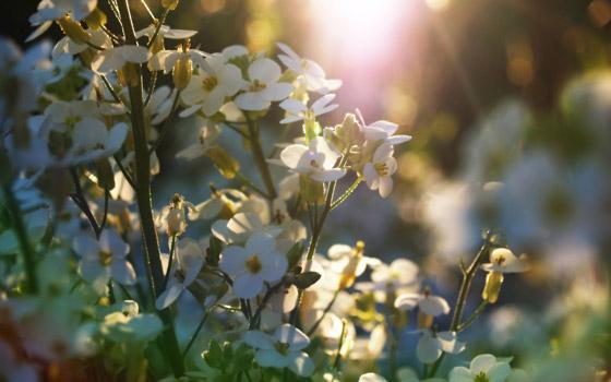 Springtime flowers wallpaper