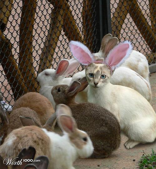 bunny-buddies-photomanipulation
