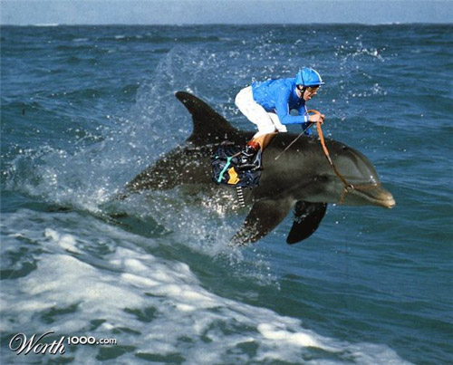 dolphin-racing-photomanipulation