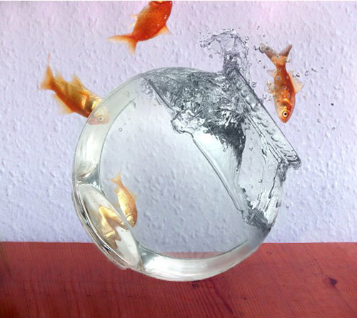 floating-fish-photomanipulation