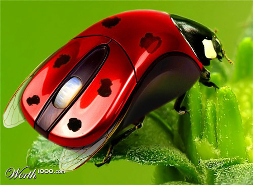 ladybird-computer-mouse
