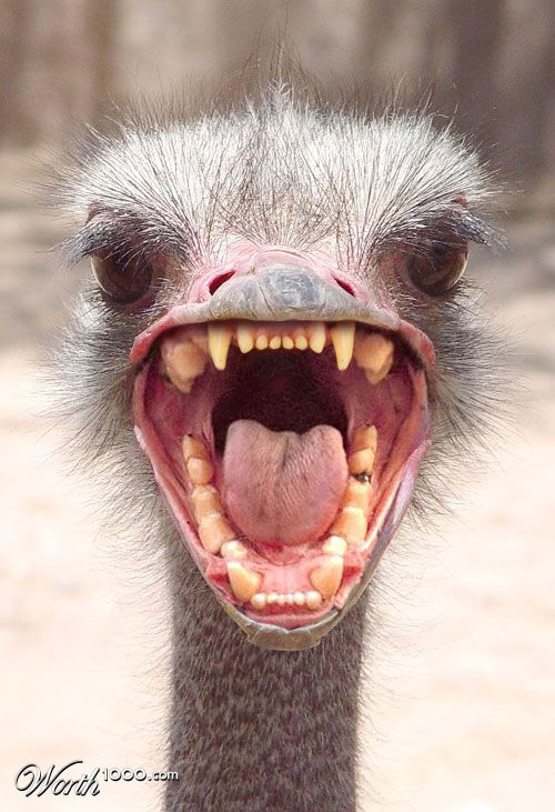 ostrich-photomanipulation