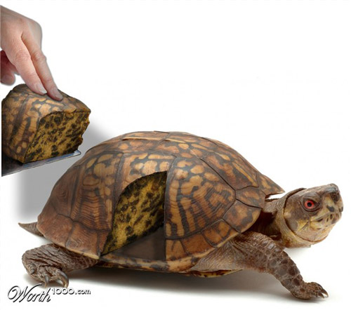 tortoise-cake-photomanipulation