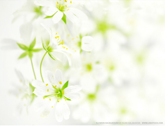 beautiful-flowers-desktop-background