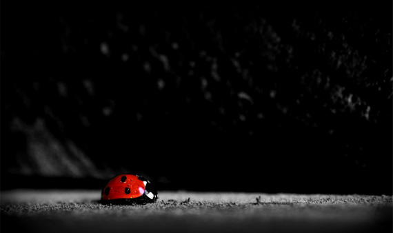 ladybug-desktop-background