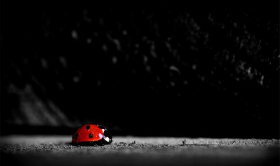 ladybug-desktop-background