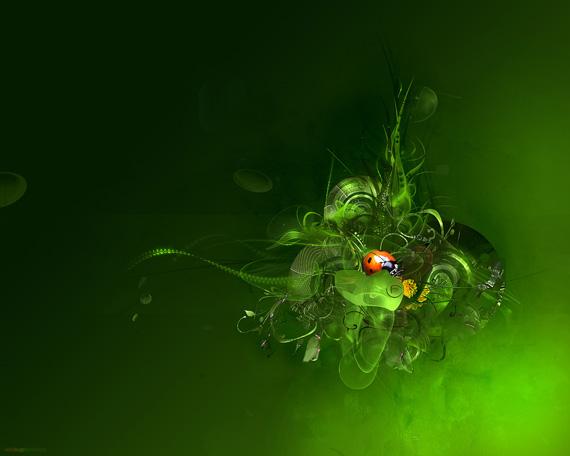 ladybug ver wallpaper