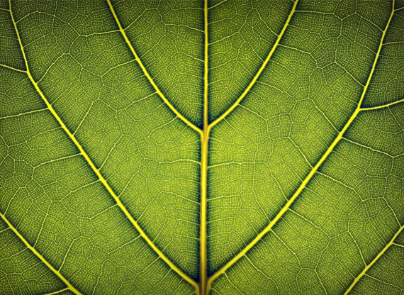 leaf-macro-desktop-background