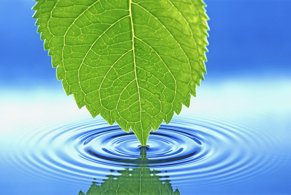 leaf-water-desktop-background