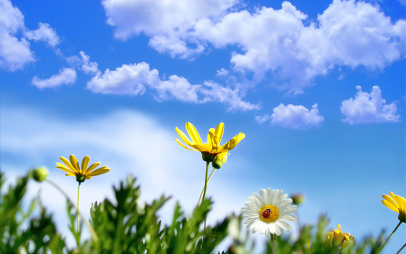 spring-flowers-dektop-background