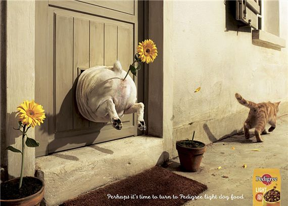Pedigree-light-most-interesting-and-creative-ads