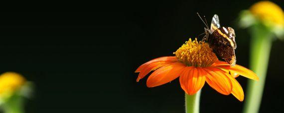 Butterfly Dual Effekt 23912647 70 Fondos de pantalla para Dual Screen