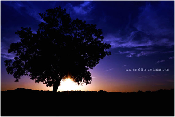 The_Silhouette_of_a_Tree_by_sara_satellite
