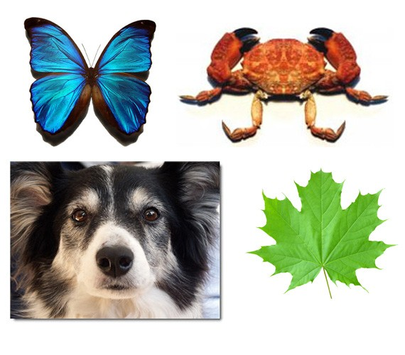 bilateral symmetry in animals - photo #37