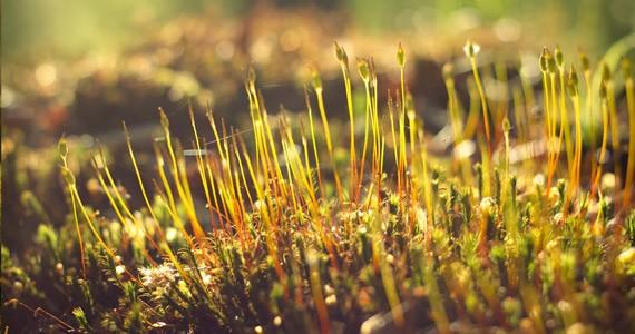 Grow Wallpaper পছন্দ না হলে টিউন ডিলিট গ্যারান্টি – মাথা নষ্ট করার মত ফুল HD ওয়ালপেপার