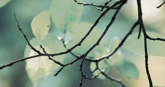 Homespun পছন্দ না হলে টিউন ডিলিট গ্যারান্টি – মাথা নষ্ট করার মত ফুল HD ওয়ালপেপার