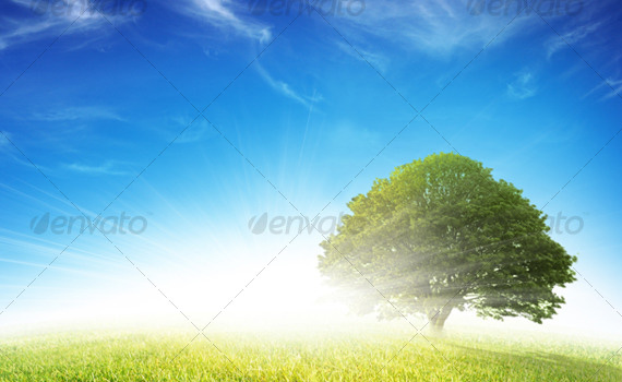 Grass-tree-premium-backgrounds-graphicriver