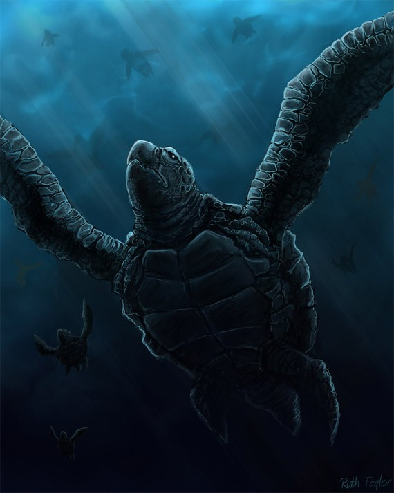artwork-01-sea-turtle