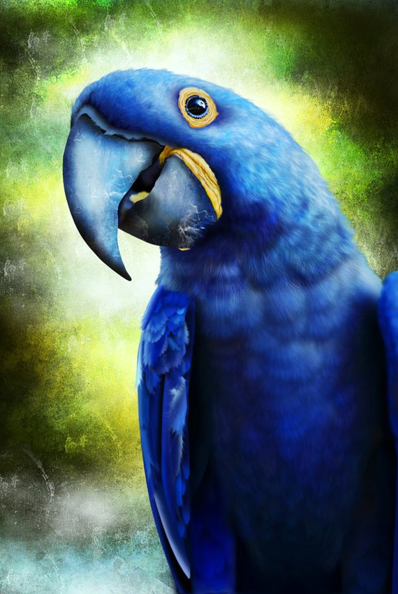 artwork-03-hyacinth-macaw