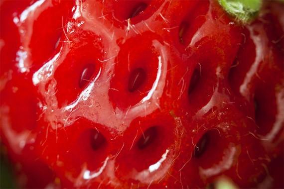 artwork-01-red-delight