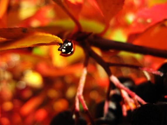 artwork-06-ladybug