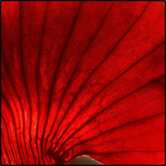 artwork-09-red
