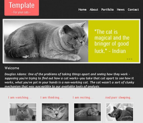 CatTemplate HTML5 and CSS3 Template