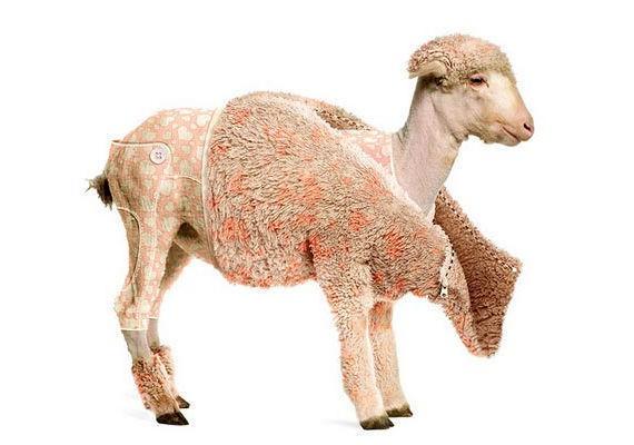 Photo Effects Week: Create a Lamb's Coat in Photoshop