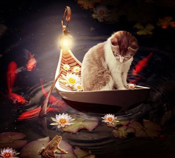 Create a Cat in a Magical Pond Scene Photo Manipulation