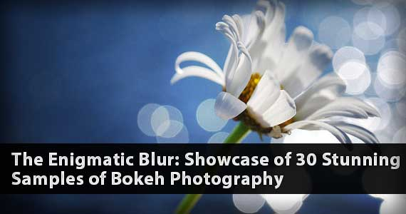 The Enigmatic Blur: Showcase of 30 Stunning Samples of Bokeh Photography