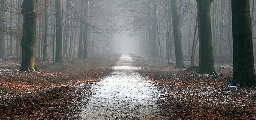 Path through a forest.